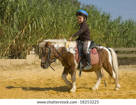 Miniature Pony Stock Images, Royalty-Free Images & Vectors ...