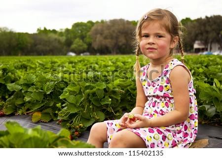 Little girl sitting on strawberry field - stock photo