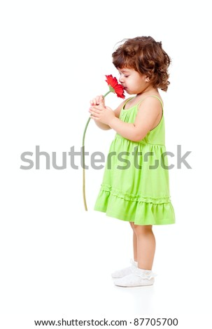 little girl smells African daisy flower in studio isolated