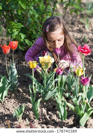 Little girl sniffing tulips in sunny day - stock photo