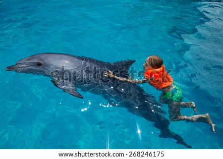 Little Girl Swimming with the Dolphin in the Swimming Pool in the Bright Sunny Day