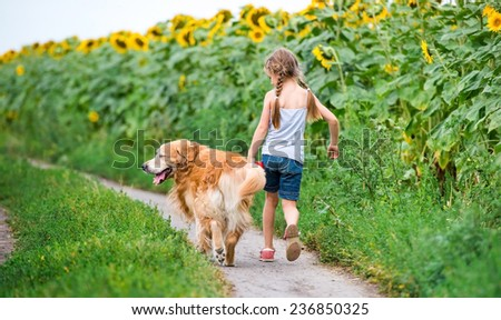 little girl walks on the leash with a golden retriever, go away in field - stock photo