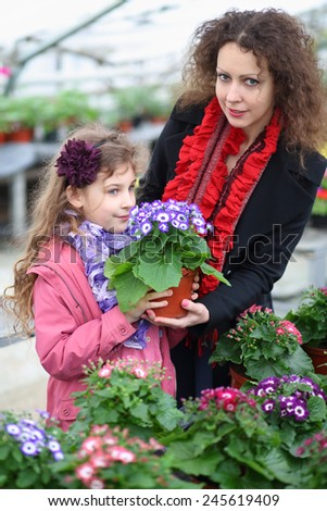 Little girl with mother holding pot with beauty cineraria in the greenhouse  - stock photo