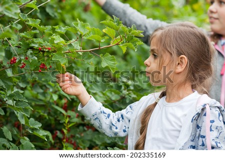 Little girls eating red currant in the garden - stock photo
