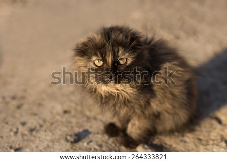 Little gray fluffy cat sitting on the ground looking at the camera. Sunlight at morning, close-up, square shot, background is blurred - stock photo