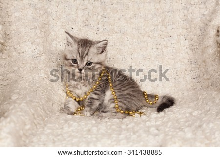 little gray kitten and a New Year's beads on a light background  - stock photo
