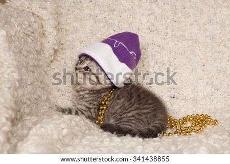 little gray kitten in a Christmas hat on a light background
