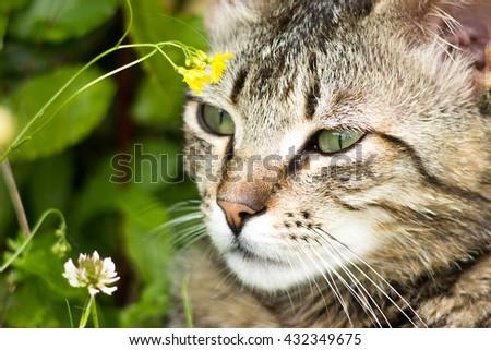 Little gray kitten portrait up on blured background - stock photo