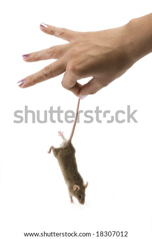 Little gray mouse is hold by beauty hand. - stock photo