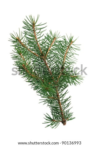 Little green fir branch isolated on white background - stock photo