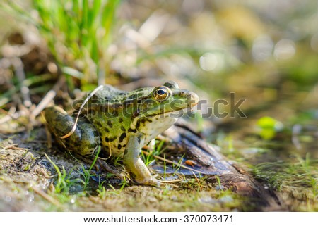 Little green frog on the shore