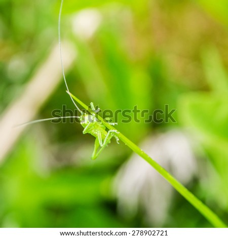 little green grasshopper sitting on green leaf on green blurred background