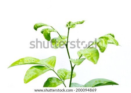 Little Green Plant and drop of water on white background - stock photo