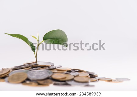 Little green plant growing in a heap of coins isolated on white background. Concept of new life