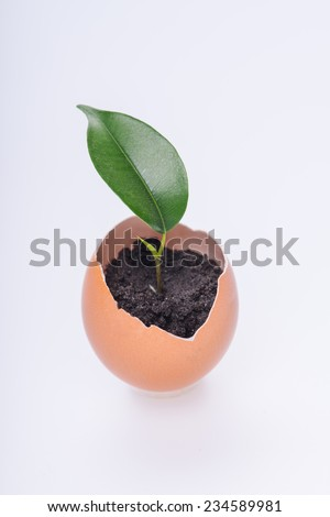 Little green plant growing in the eggshell isolated on white background. Concept of new life - stock photo