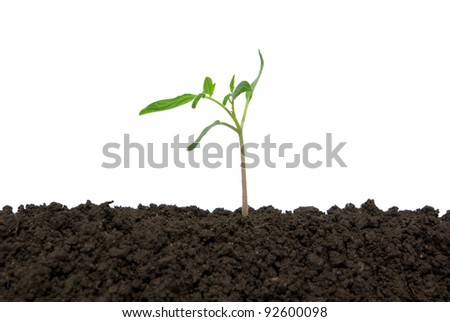 Little green plant on white background