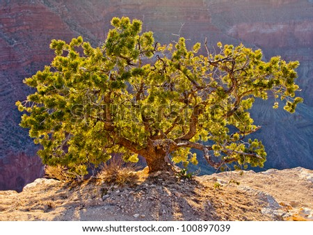 Little green tree in the middle of the desert - stock photo