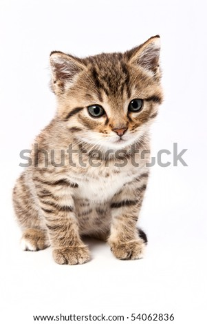 Little grey cat isolated on white - stock photo