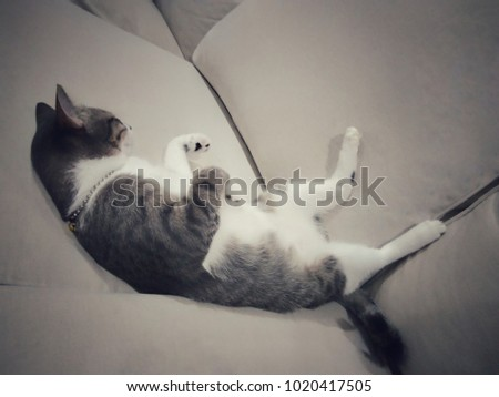 Little grey cat sleeping on sofa