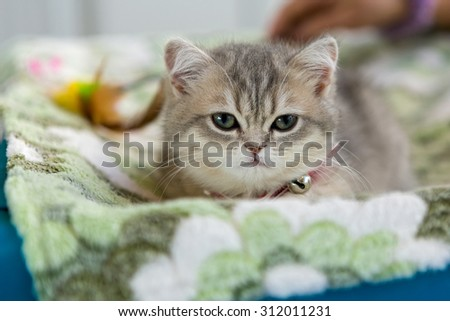 Little grey kitten on a green Mat