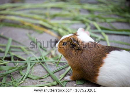 little hamster looking at something - stock photo