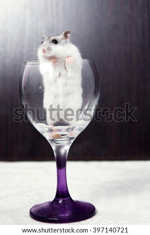 little hamster peeking out of a wine glass - stock photo