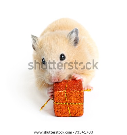 Little hamster with present isolated on white - stock photo
