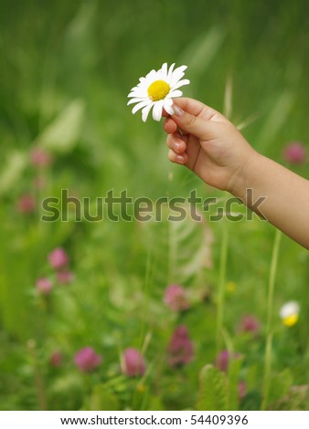 Little hand with daisy - stock photo