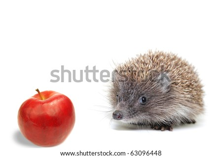 Little hedgehog on a white background - stock photo