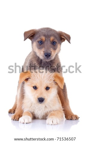Little homeless puppy: playing together and looking at the camera - stock photo