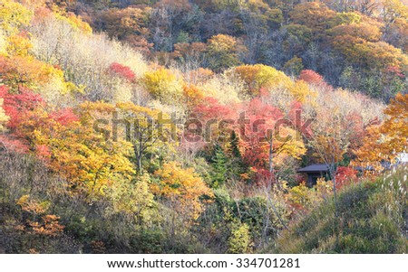 little hut hide in the mountain of colorful tree at Hokkaido Japan - stock photo
