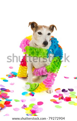 Little Jack Russel is having a colorful birthday - stock photo