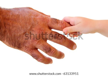 little kid hand holding hairy father big hand isolated on white - stock photo