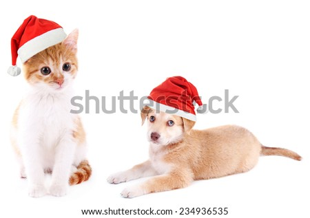 Little kitten and cute Golden Retriever puppy with Santa Hat isolated on white - stock photo