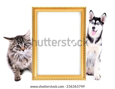 Little kitten and  husky puppy with frame isolated on white - stock photo
