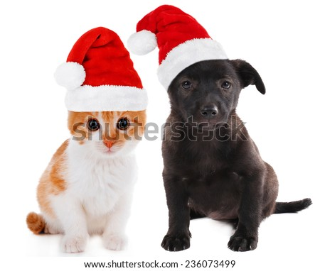 Little kitten and puppy isolated on white - stock photo