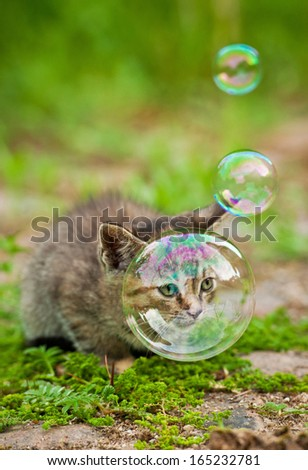 Little kitten and soap bubbles - stock photo