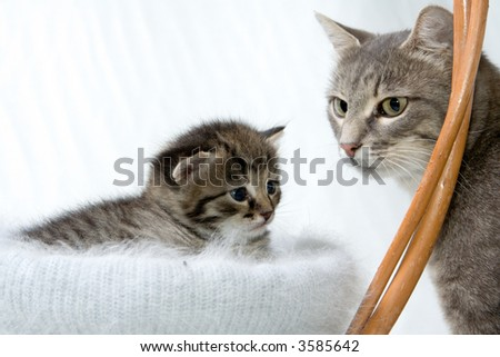 Little kitten at basket and his mother.
