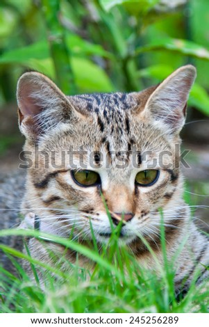 Little kitten at the meadow among the flowers - stock photo