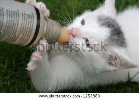 Little kitten being fed with a bottle of milk - stock photo