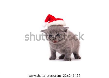 Little Kitten British blue Santa Claus. Kitten one month. - stock photo