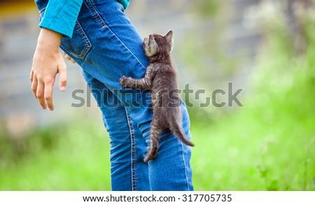 little kitten climbs on a leg man - stock photo