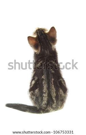 Little kitten closeup from the back isolated over white