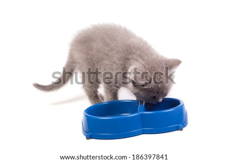 Little kitten eating milk from a bowl isolated on white - stock photo