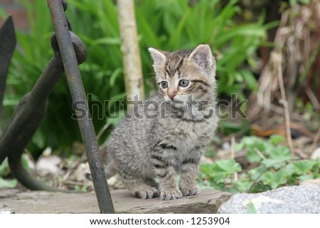 Little kitten exploring the garden - stock photo