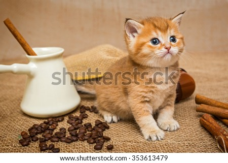 Little kitten Golden color and ingredients for making coffee - stock photo