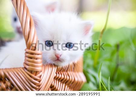 Little kitten in a basket on the grass, - stock photo