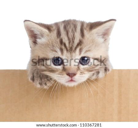 little kitten in cardboard box - stock photo