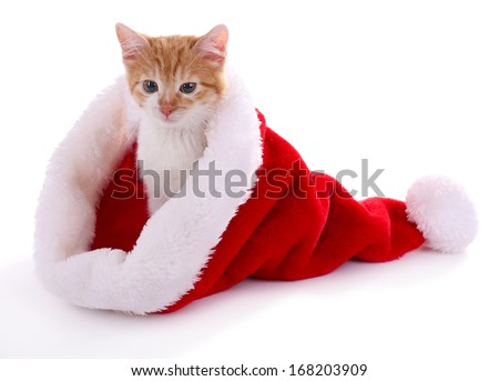 Little kitten in Christmas hat isolated on white - stock photo