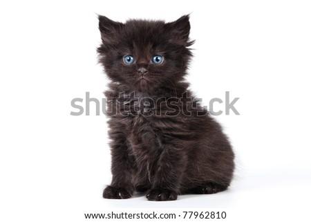 Little kitten in pink background - stock photo